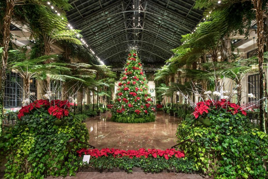 Holiday Tour Hours Christmas Tree Display December